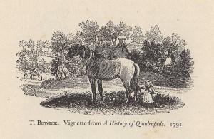 bewick horse