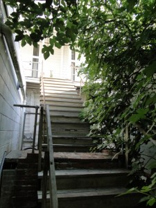 back stairs and fig tree